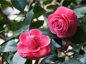 Vẻ đẹp hoa lệ của loài hoa hiếm nhất nhì thế giới