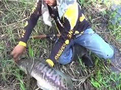 Clip: Tóm gọn cá lóc khổng lồ bằng mồi giả
