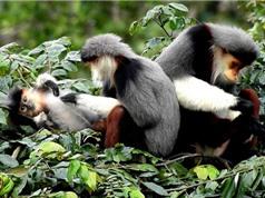 Phát triển bền vững hệ sinh thái tự nhiên bán đảo Sơn Trà