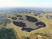 Khám phá nhà máy điện Mặt Trời hình gấu trúc ở Trung Quốc