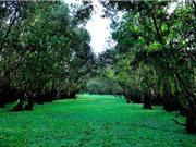 """""""Mục sở thị"""" rừng tràm đẹp nhất miền Tây Nam Bộ"""