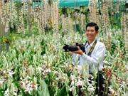 Lâm Đồng: Vườn lan 'khủng' sở hữu các loại lan rừng quý hiếm bậc nhất đất Việt