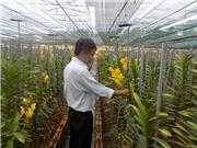 Vườn lan nhiệt đới công nghệ cao ở Khánh Hòa
