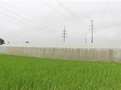 Vĩnh Phúc: Nghiệm thu mô hình nhà lưới ứng dụng công nghệ cao tại thị xã Phúc Yên