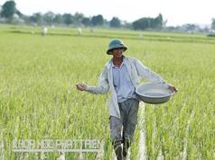 Một số nghiên cứu khoa học về phân bón ở Việt Nam