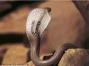 Anh: Nuôi rắn, bị cắn thập tử nhất sinh còn bị luật xử