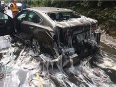 3,5 tấn lươn nhớt phủ khắp đường cao tốc Mỹ