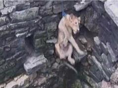 Giải cứu sư tử rơi xuống giếng sâu 25 mét