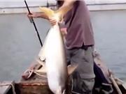 """Clip: Cần thủ câu được cá tra """"khủng"""" trên sông Đồng Nai"""