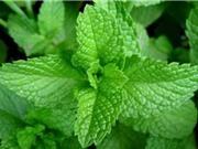 3 loại rau thơm quen thuộc trị hôi miệng