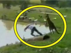 """Clip: Thanh niên bị kangaroo đá """"lộn cổ"""" xuống hồ"""