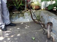 Giải mã điềm báo khi chim bay, rắn bò vào nhà dưới góc nhìn phong thủy