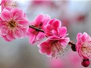 Ngây ngất trước vẻ đẹp của loài biểu tượng cho mùa Đông