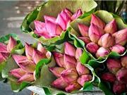 Hoa sen: Thuốc quý từ gốc tới ngọn