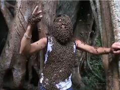 """Clip: """"Dị nhân"""" người Điện Biên liều mạng cho ong rừng bu kín người"""