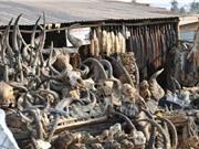 Chợ phép thuật bùa chú ở Châu Phi