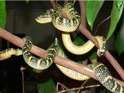Khám phá ngôi đền có rắn độc bò lổm ngổm quanh du khách