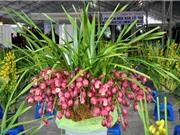 Kỹ thuật trồng và chăm bón hoa địa lan vô cùng đơn giản