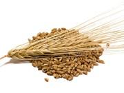 6 lợi ích tuyệt vời của lúa mạch với sức khỏe