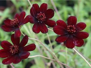 Chiêm ngưỡng vẻ đẹp của loài hoa đã tuyệt chủng ở môi trường tự nhiên