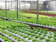 Hướng sản xuất nông nghiệp ở Nam Định: Chuyển từ lượng sang chất bằng công nghệ cao