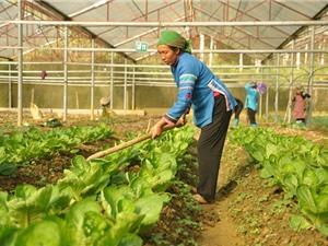 Sơn La đẩy mạnh sản xuất nông nghiệp công nghệ cao
