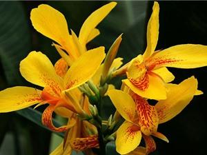 """""""Tận mục"""" loài hoa đẹp thứ 3 thế giới"""