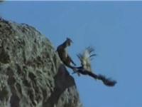 Clip: Màn săn dê núi tàn ác của đại bàng