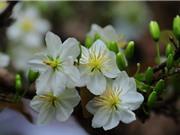 Vẻ đẹp của loài hoa hiếm ở Việt Nam