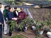 Lạng Sơn: Kiểm tra tiến độ mô hình trồng Gừng núi đá tại huyện Bắc Sơn