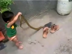 Clip: Ớn lạnh trước cảnh bé gái gần 2 tuổi dùng tay không bắt rắn