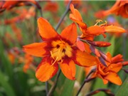 Ngất ngây trước vẻ đẹp của loài hoa có thể điều trị bệnh ung thư