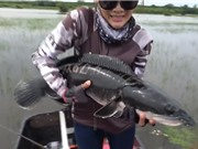 Clip: Người đẹp câu được cá lóc khổng lồ
