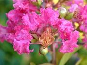 Quy trình trồng và chăm sóc cây hoa tường vi đúng kỹ thuật
