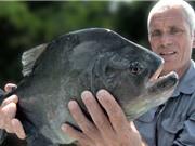 Clip: Câu được cá hổ ăn thịt người trên sông Amazon
