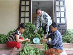Cả xóm trồng đậu đũa xuất khẩu: Dễ làm, tiền tươi thóc thật