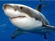 """Những """"sát thủ"""" cá mập đáng sợ nhất thế giới"""