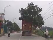 Clip: Xe container quẹt ngã cây bên đường suýt đè trúng xe máy