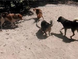 Clip: Cuộc chiến sinh tử giữa bầy chó với con rắn