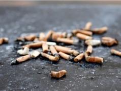 Dùng đầu lọc thuốc lá để... xây dựng đường sá