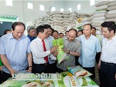 Ông Đào Đức Huấn: Cần cơ cấu lại hình ảnh gạo Việt Nam