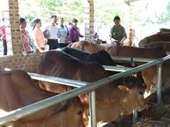 Phú Thọ: Mong có quy hoạch để đẩy mạnh nông nghiệp công nghệ cao