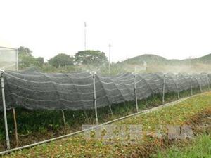 Tiền Giang đầu tư 1.204 tỷ đồng làm nông nghiệp công nghệ cao
