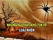 Những sự thật khó tin về loài nhện