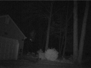 Vật thể lạ giống UFO lượn trong rừng đêm