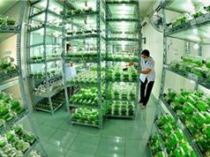 Giải 'bài toán' nông nghiệp công nghệ cao