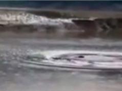 Sinh vật giống quái vật Loch Ness gây hoang mang