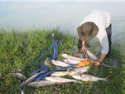 Clip: Thán phục tài câu cá của cần thủ Bình Dương