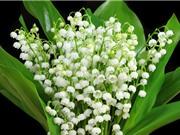 """""""Tận mục"""" loài hoa đẹp bậc nhất thế giới"""