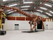 Công bố loài khủng long lớn nhất từng tồn tại trên Trái Đất